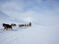 Миссия Петропавловской и Камчатской епархии в традиционной камчатской гонке на собачьих упряжках  «Берингия 2012»