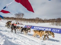 2 марта состоялось официальное открытие традиционной камчатской гонки на собачьих упряжках «Берингия-2014»